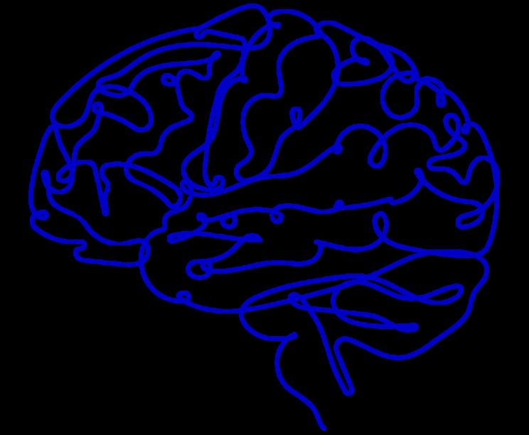 Blaue Skizze von Gehirn